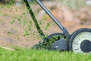 Lawn Maintenance, Grass Mowing